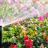 Полив газона и цветников